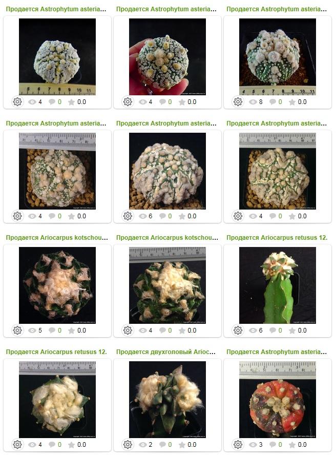 Продается Astrophytum asterias super kabuto, продается лофофора